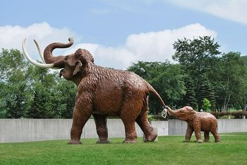 800px-Parent_and_child_of_elephas_namadicus.JPG